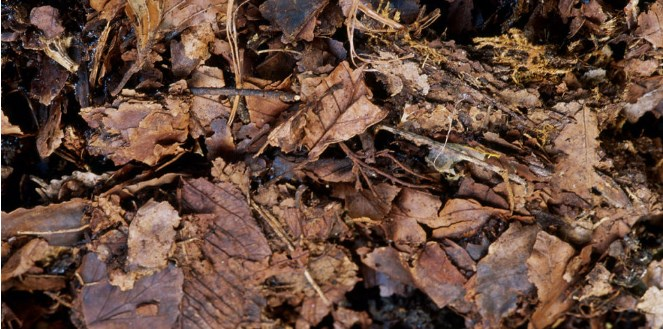 Leaf mulch and fallen leaves on floor