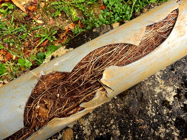 root ingress in drainage pipework